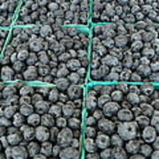 Bounty Of Blueberries Art Print