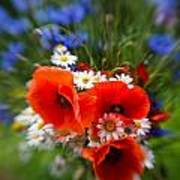 Bouquet Of Fresh Poppies Camomiles And Cornflowers Art Print
