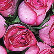 Bouquet Of Pink Roses Art Print