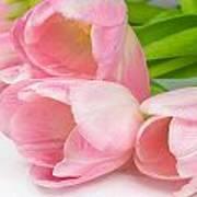 Bouquet Of Pink Tulips. Art Print