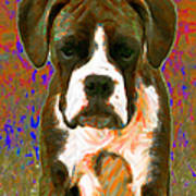 Boxer 20130126v1 Art Print by Wingsdomain Art and Photography
