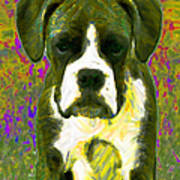 Boxer 20130126v2 Art Print by Wingsdomain Art and Photography