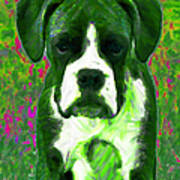 Boxer 20130126v3 Art Print by Wingsdomain Art and Photography