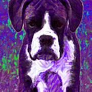 Boxer 20130126v6 Art Print