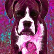 Boxer 20130126v7 Art Print by Wingsdomain Art and Photography