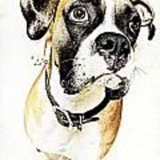 Boxer Dog Poster Art Print