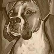 Boxer Dog Sepia Print Art Print by Robyn Saunders