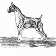 Boxer Art Print