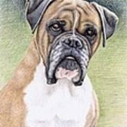 Boxer Portrait Art Print