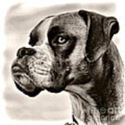 Boxer Profile Art Print
