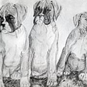 Boxer Puppy Dog Poster Print Art Print by Olde Time  Mercantile