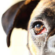 Boxer's Eye Art Print