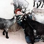 Boy Surrounded By Hungry Goats Art Print