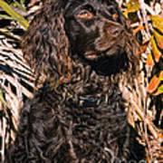Boykin Spaniel Portrait Art Print