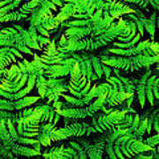 Bracken Ferns Art Print