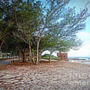 Bradenton Beach  Pine Trees Art Print