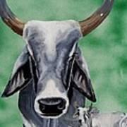 Brahma Bull Art Print