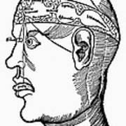 Brain Diagram, 1503 Art Print