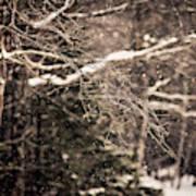 Branch In Forest In Winter Art Print