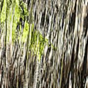 Branch In Waterfall Art Print