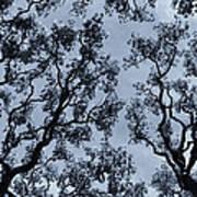 Branches Across Art Print