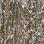 Branches And Twigs Covered In Fresh Snow Art Print