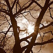 Branches In The Dark 2 Art Print