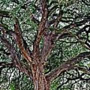 Branches Of Brio Art Print