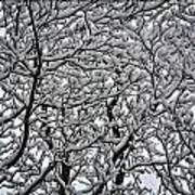 Branches Of Our Life Art Print