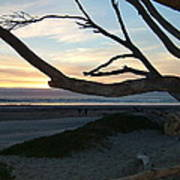 Branches Over The Beach Art Print