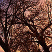 Branching Out At Sunset Art Print