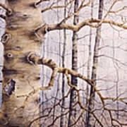 Branching Poplar Art Print
