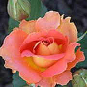 Brass Band Rose Art Print