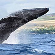 Breaching Humpback Whale Art Print