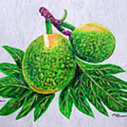 Bread Fruit Art Print