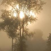 Breaking Through The Fog Art Print