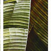 Breeze - Banana Leaf Triptych Art Print
