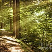 Eternal Woods Art Print