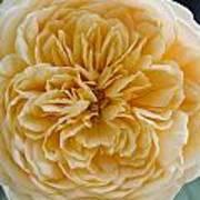 Brenda's Garden I Art Print
