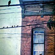 Brick Building Birds On Wires Art Print