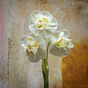 Bridal Crown Narcissus Square Art Print