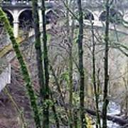 Bridge Arch Through The Trees Art Print