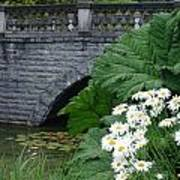 Stone Bridge Daisies Art Print
