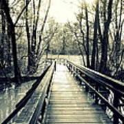 Bridge In The Wood Art Print