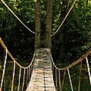 Bridge To The Forest Art Print
