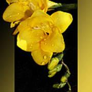 Bright And Yellow Art Print