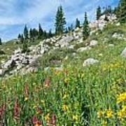 Bright Colors Of A Colorado Summer Art Print