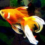 Bright Golden Fish In Dark Pond Art Print