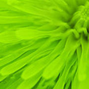 Bright Lime Green Dandelion Close Up Print by Natalie Kinnear