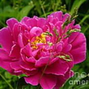 Bright Pink Blossoms Art Print